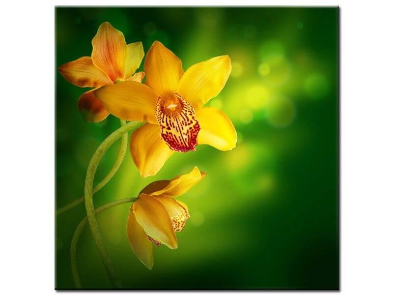 Tableau fleurs orchid e jaune pas cher boutique d co en - Magasin deco pas cher en ligne ...