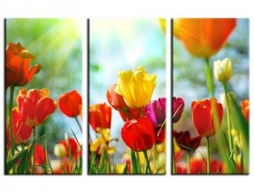 Tableau moderne fleurs tulipes