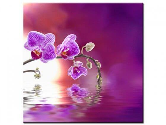 Tableau fleurs orchidée violet