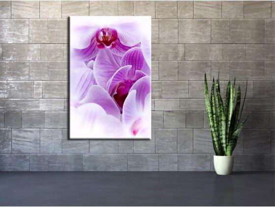 Tableau fleur orchidée violet
