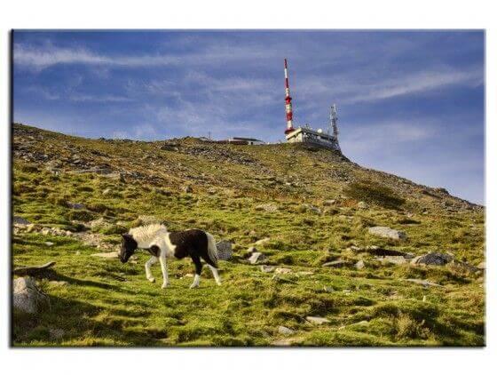 Tableau décoratif paysages Pottok sur la Rhune