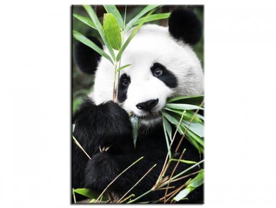 Tableau design Regard de Panda