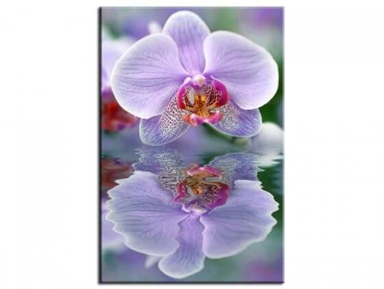 Tableau fleur déco orchidée violette