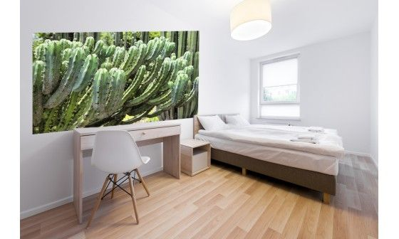 papier peint cactus d cor mural pas cher hexoa. Black Bedroom Furniture Sets. Home Design Ideas
