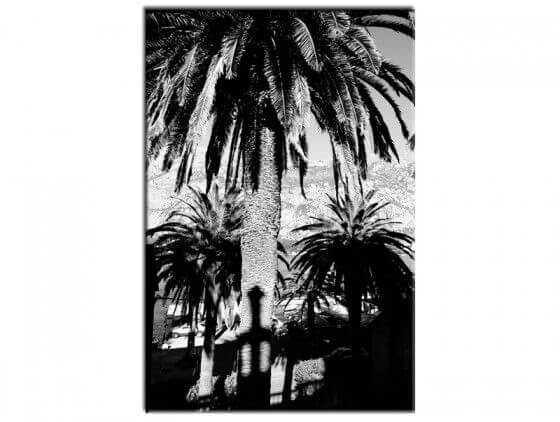 Tableau noir et blanc palmiers Monténégro