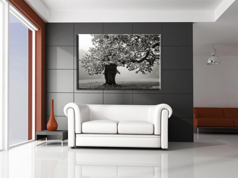 tableau contemporain photo arbre noir et blanc vente en. Black Bedroom Furniture Sets. Home Design Ideas