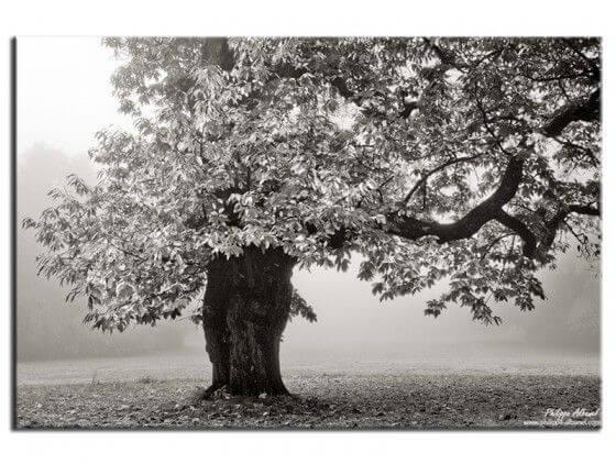 Tableau photo arbre noir et blanc