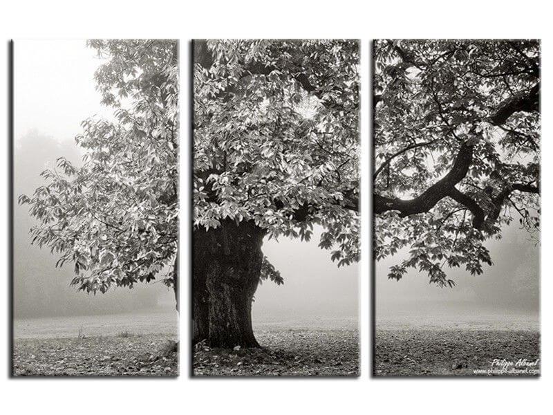 tableau contemporain photo arbre noir et blanc vente en ligne. Black Bedroom Furniture Sets. Home Design Ideas