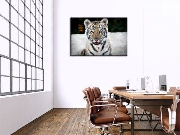 Tableau animaux bébé tigre