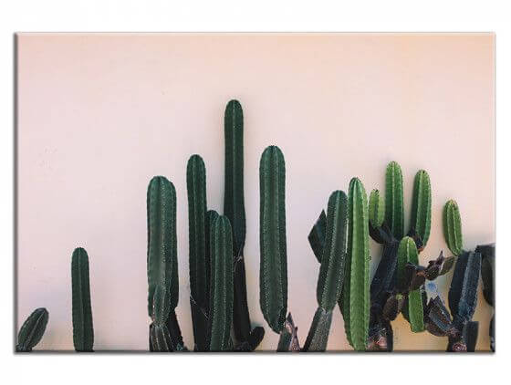Tableau mur de cactus