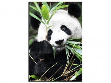 Tableau design Regard de Panda