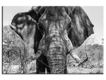 Tableau deco Éléphant d'Afrique