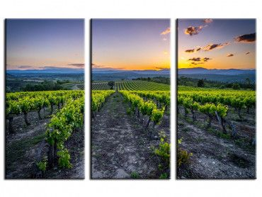 Tableau photo Vineyard