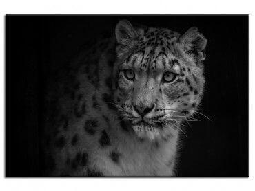 Tableau animaux le regard du léopard