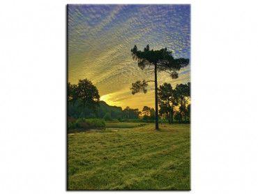 Tableau photo paysage au milieu de la nature