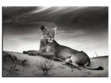 Tableau noir et blanc photo lionne