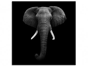Tableau deco L'éléphant dans l'ombre