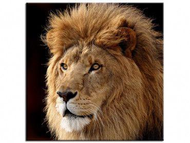 Tableau déco lion animaux roi de la jungle