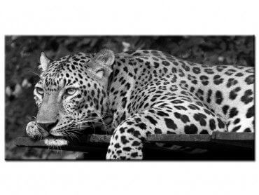 Tableau décoratif animaux leopard