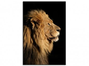 Tableau animaux photo lion
