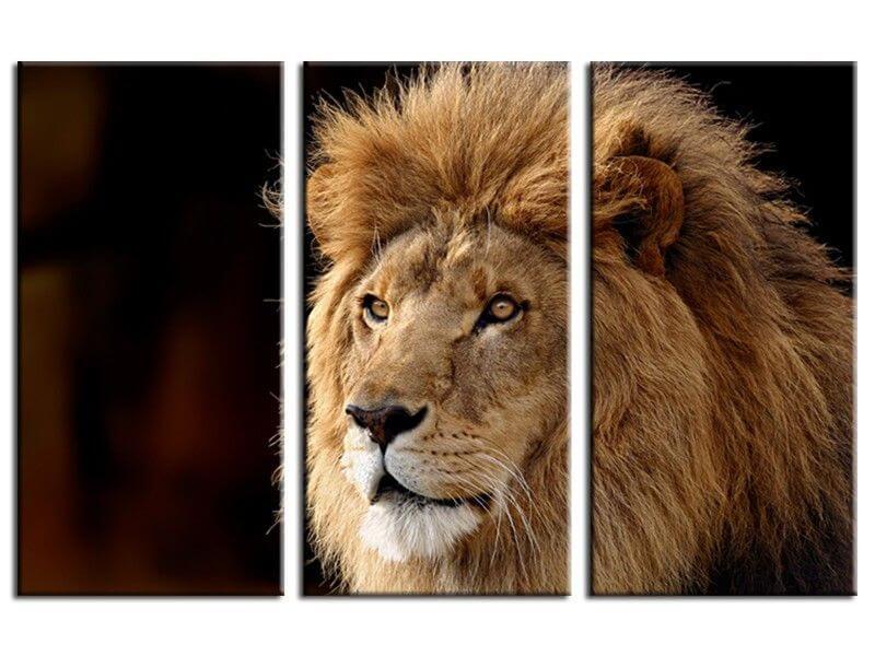Tableau Deco Photo Lion 224 Vendre Tableaux Pas Chers