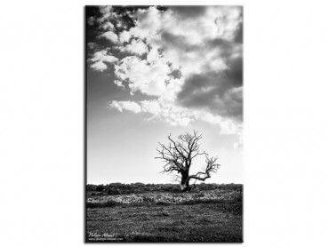Tableau moderne arbre solitaire