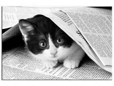 Tableau noir et blanc déco chat dans journal