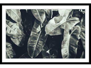 Affiche feuilles tropicales
