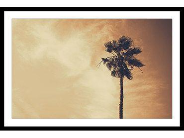 Affiche moderne palmier désert