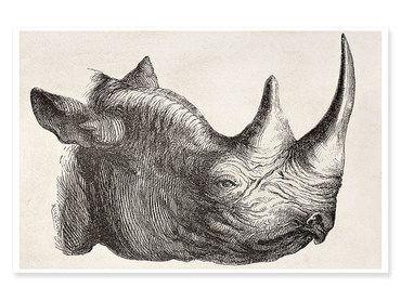Affiche dessin tête de rhinocéros