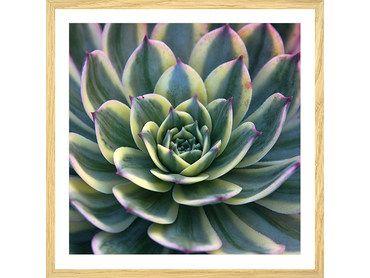 Affiche plante design