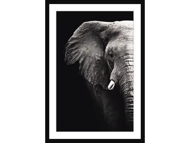 Cadre noir et blanc moderne éléphant