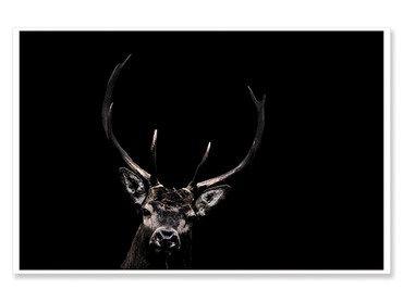 Affiche animaux le cerf majestueux