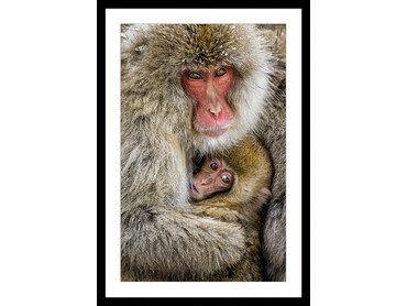 Cadre animaux calin entre macaques japonais