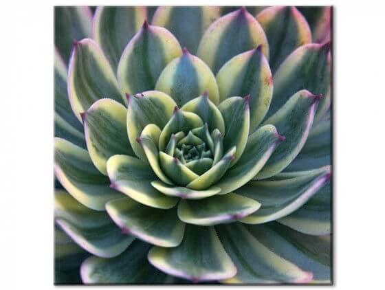 Tableau plante design