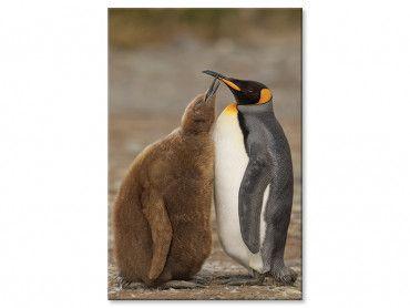 Tableau moderne les pingouins