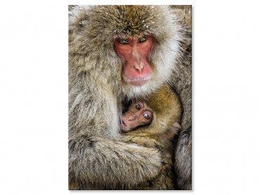 Tableau animaux macaques japonais