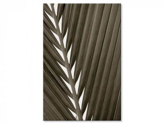 Tableau macro noir et blanc feuille tropicale