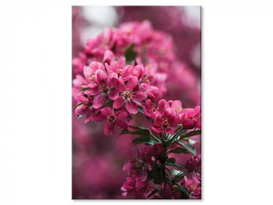Tableau photo arbuste en fleur
