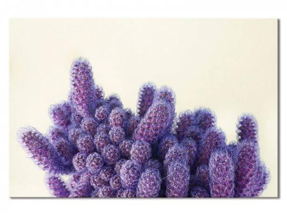 Tableau graphique violet cactus