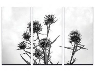 Tableau chardon noir et blanc