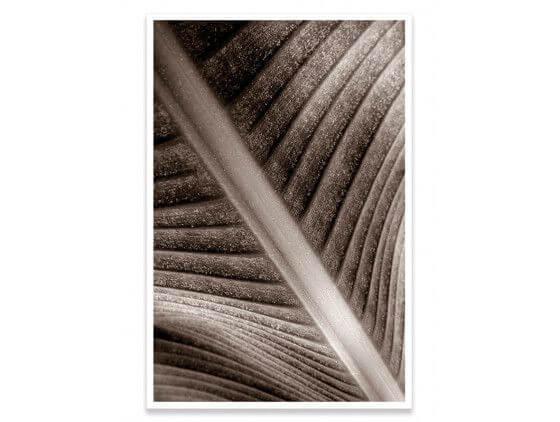 Cadre macro feuille de palmier