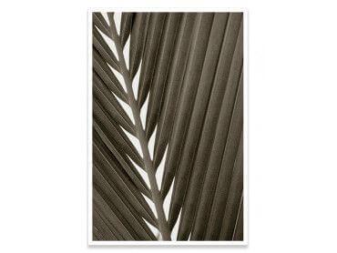 Cadre macro noir et blanc feuille tropicale