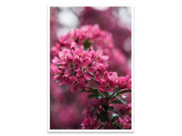 Cadre deco arbuste en fleur