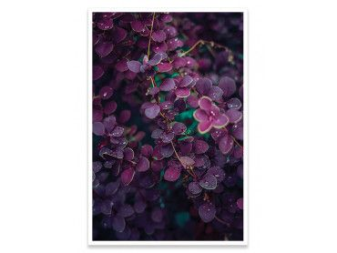 Cadre deco feuille violette sous la rosée