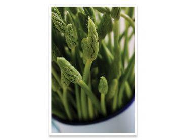 Affiche graine germée verte