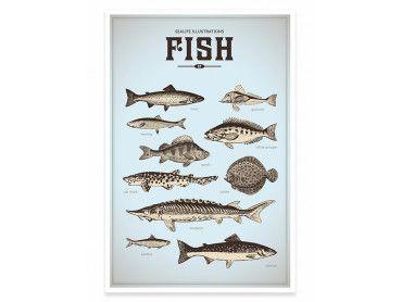 Cadre les poissons de la mer