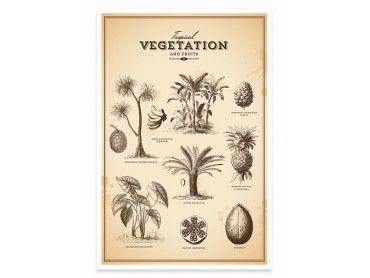 Cadre illustration vegetation tropicale