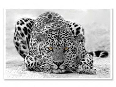 Cadre animaux léopard noir et blanc