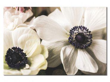 Tableau Photo fleur blanche au coeur violet